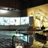 SULLE TRACCE DELLA VITA ovvero la Paleontologia.