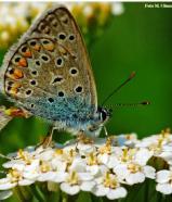giornata delel farfalle 2015_160X186