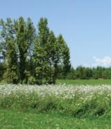 biodiversità al bosco_homepage-box