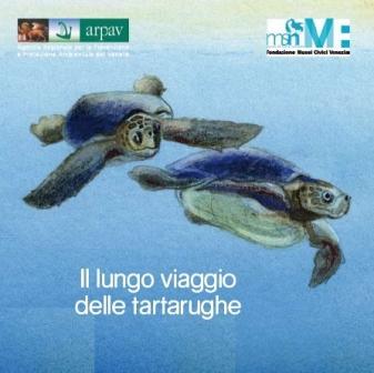 Il lungo viaggio delle tartarughe marine