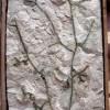 Collezione-paleontologica-Massalongo