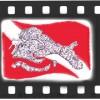 logo-cdv_2-copy