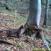 06_biodiversità ambiente alpino