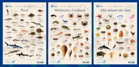 POSTER - La fauna marina dell'Adriatico