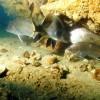 Acquario corvine tegnue